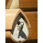 Avianex nest box Wild Bird Nest Boxes British Bird Food - UK wild bird food suppliers, bird seed and garden wildlife