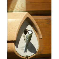 Avianex nest box