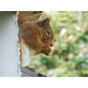 Squirrels (5)
