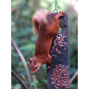 Squirrel Proof Feeders (15)