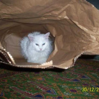 Portia making use of re-usable packaging - Sometimes I just want to get away from the rat race