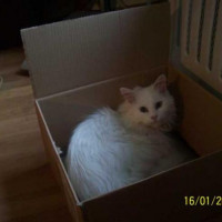 Portia making use of re-usable packaging - A new bed for me? now that's thinking out of the box!