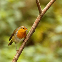Robin by Martin Wood - Spotted from a Hide at Blashford Nature Reserve. Robins love our Robin and Tit seed mix.