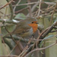 Robin by Jo Mills - Robin and Tit mix, wild bird food, garden bird food, returnable packaging, wild bird food suppliers