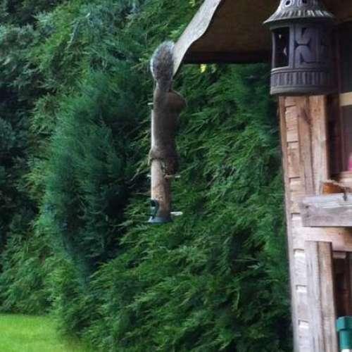 Pesky Squirrel by sam