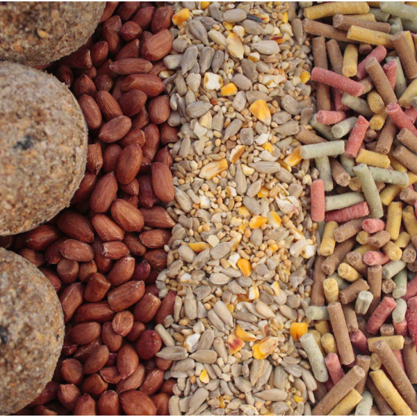 Seed and suet variety pack Wild Bird Seed Mixes British Bird Food - UK wild bird food suppliers, bird seed and garden wildlife