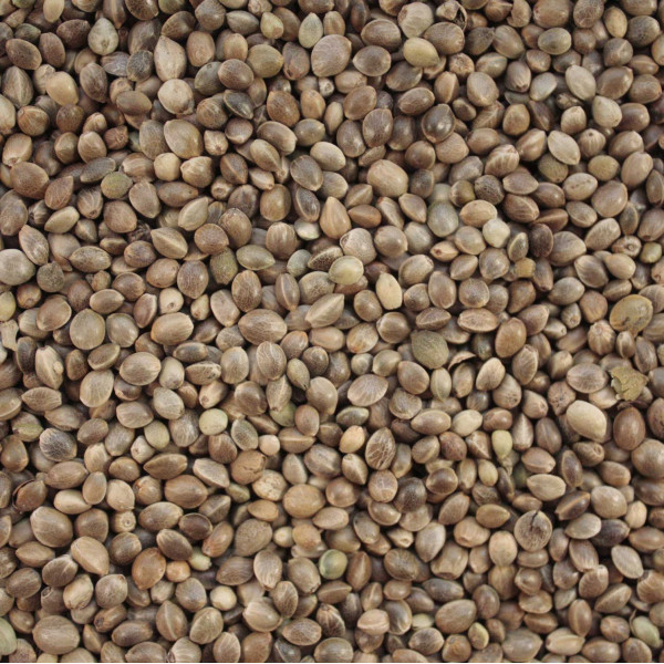 Hemp seed for birds-quality bird food Wild Bird Straight Seeds British Bird Food - UK wild bird food suppliers, bird seed and garden wildlife