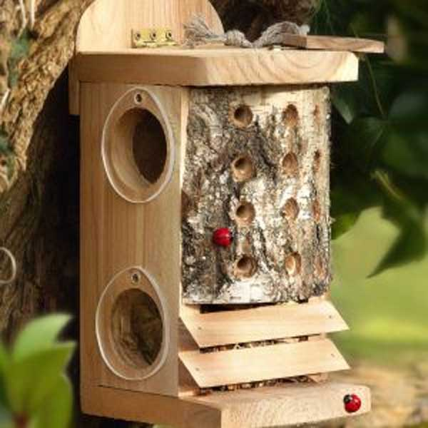 Ladybird / Lacewing Log
