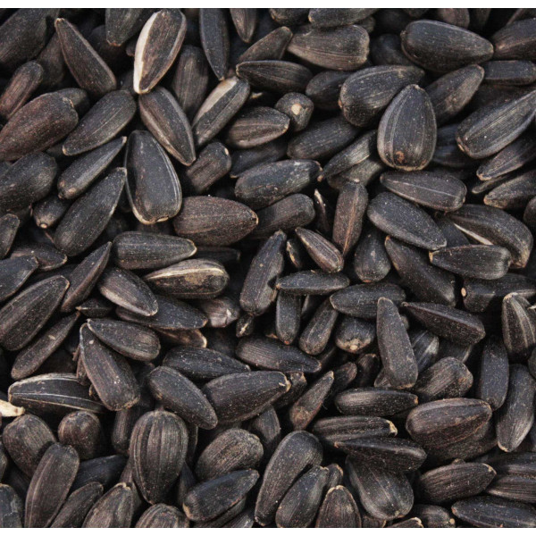 Black Sunflower Seeds Wild Bird Straight Seeds British Bird Food - UK wild bird food suppliers, bird seed and garden wildlife