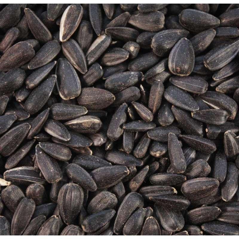 Black Sunflower Seeds Sunflower Seed For Birds