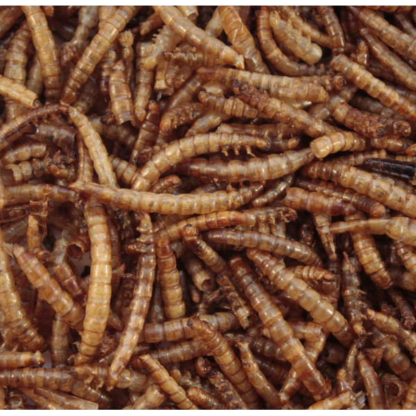 Mealworms for birds Special foods British Bird Food - UK wild bird food suppliers, bird seed and garden wildlife