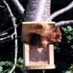 Squirrel Feeder heavy duty Squirrels British Bird Food - UK wild bird food suppliers, bird seed and garden wildlife