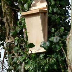 Tree Creeper nest box