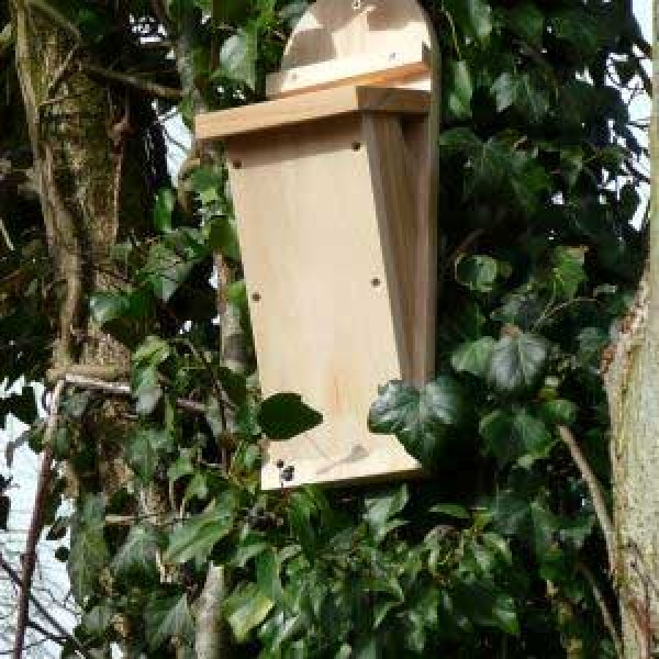 Tree Creeper nest box