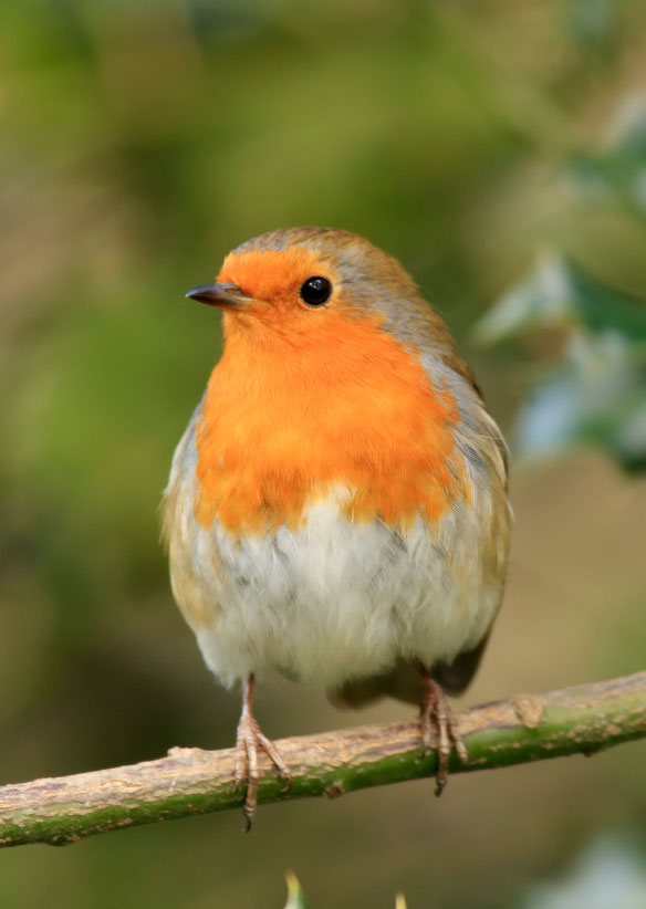 Use our Bird Guide to identify birds learn about the life history listen to the sounds and watch bird behavior on videothe most comprehensive guide to Nort